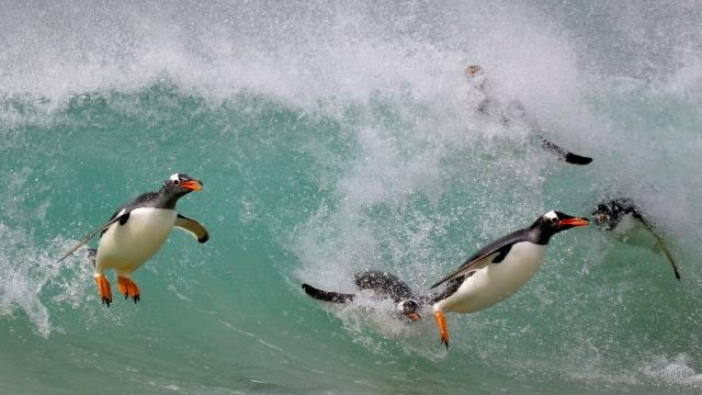 Пингвины прыгают в воду