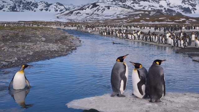 Прекрасный вид на заснеженные горы и пингвинов
