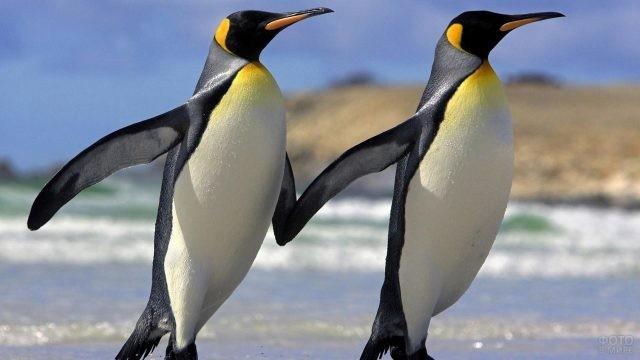 Птицы передвигаются вместе, держась за крылья