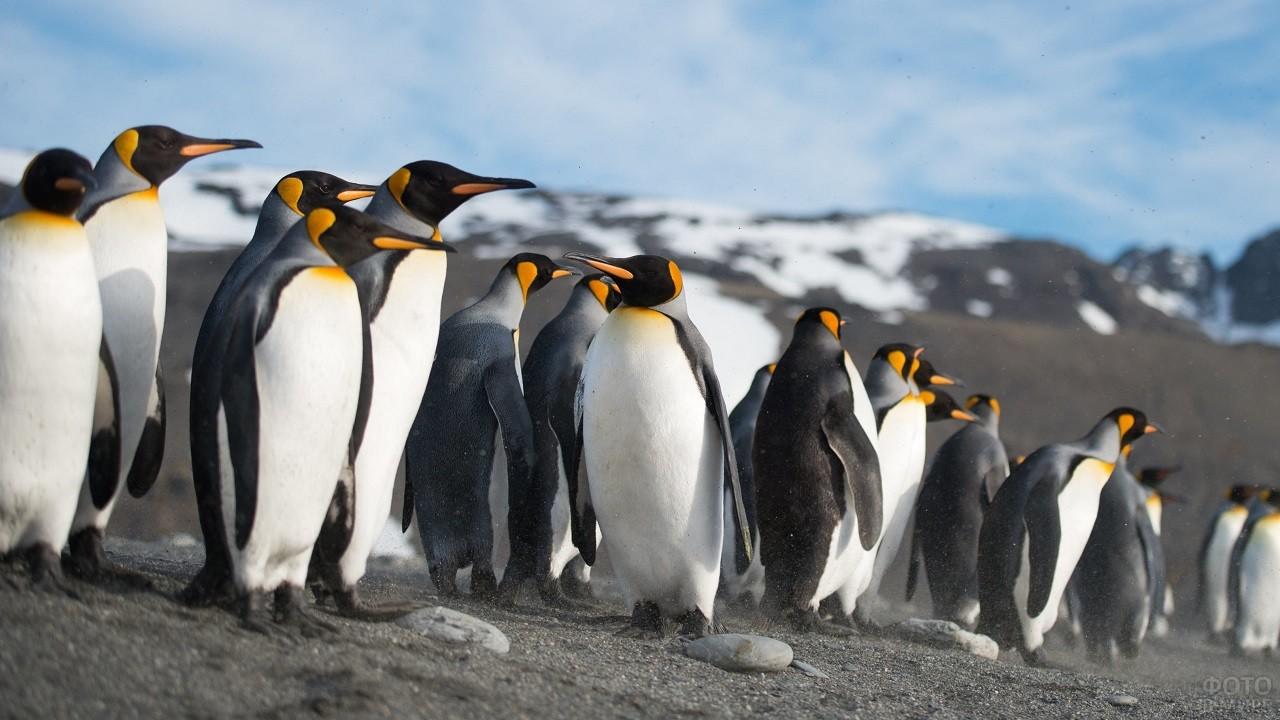 Стая пингвинов на фоне красивого пейзажа