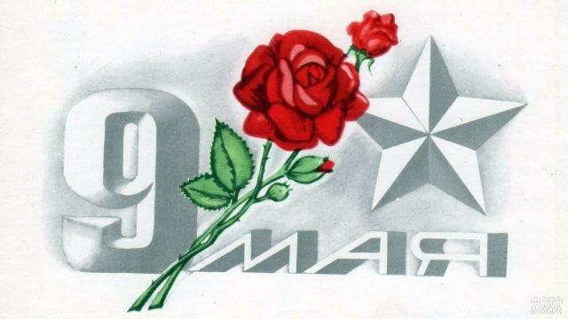 Открытка к Дню Победы с розой