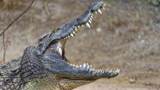 Крокодил раскрыл свою зубастую пасть