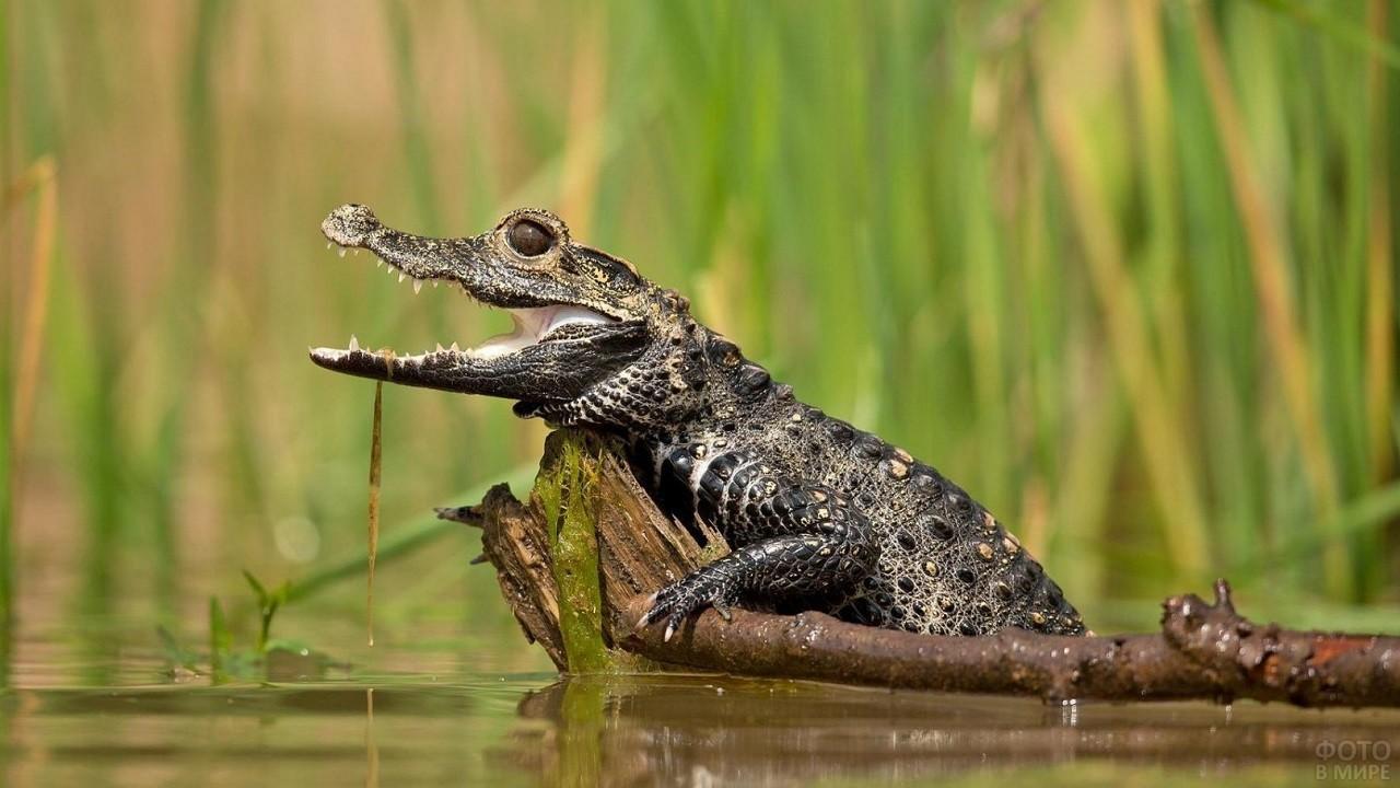 Маленькая рептилия стоит на ветке дерева