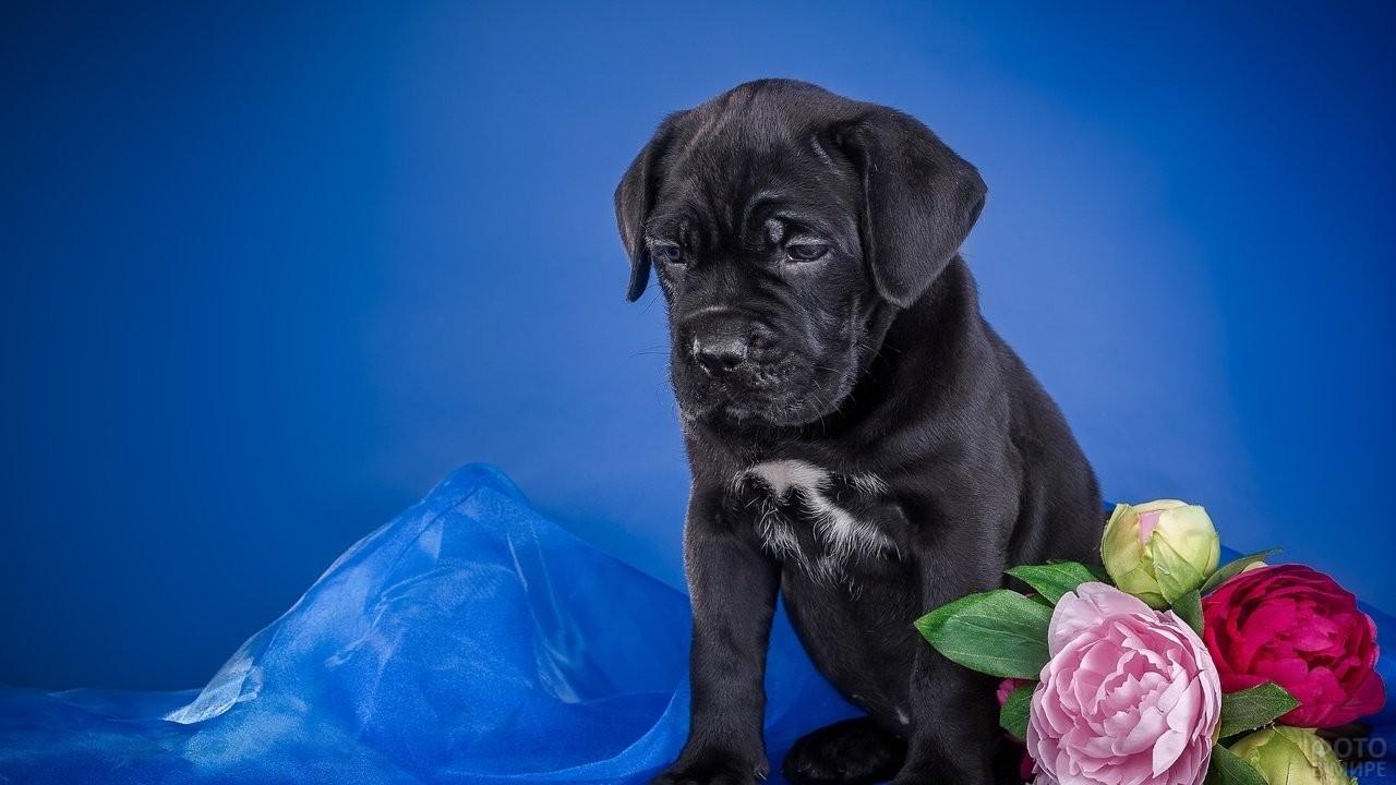 Маленький щенок на фоне красивого интерьера