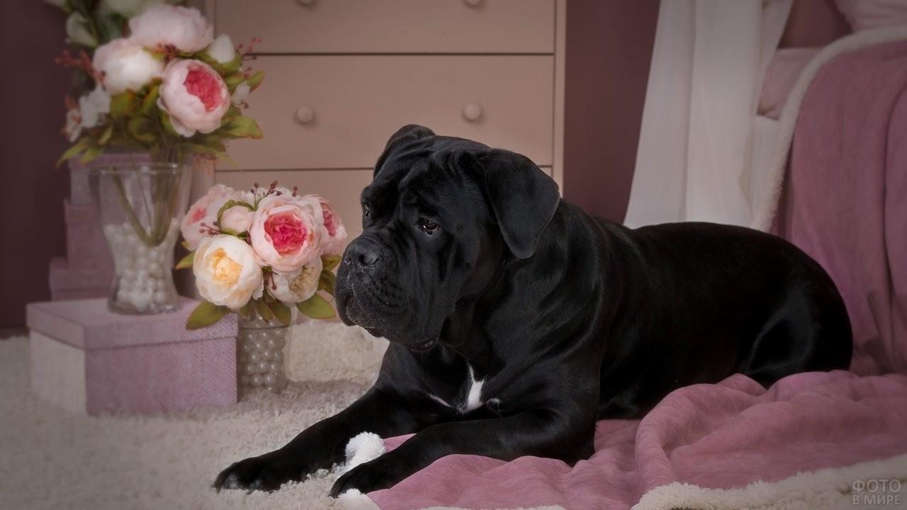 Пёс на розовом пледе на фоне букетов цветов