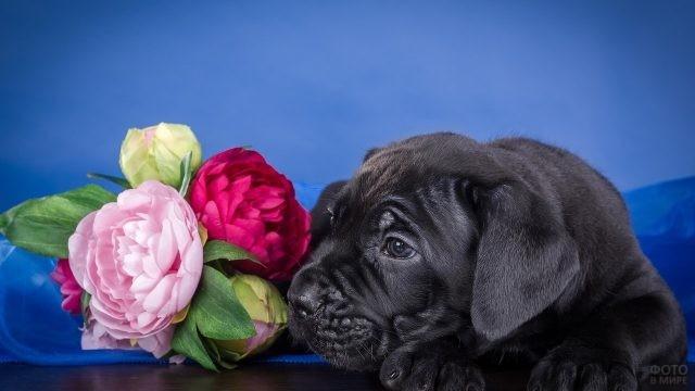 Собачка лежит рядом с цветами