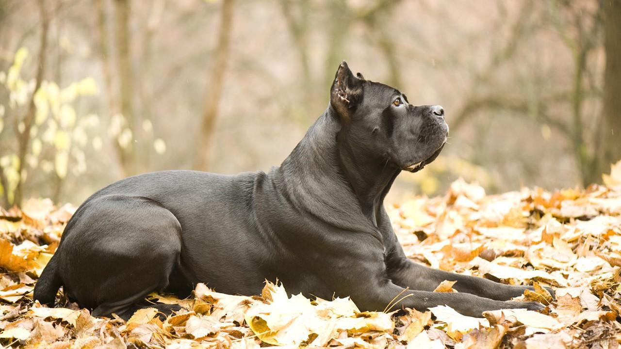 Собака отдыхает на природе в осеннюю пору