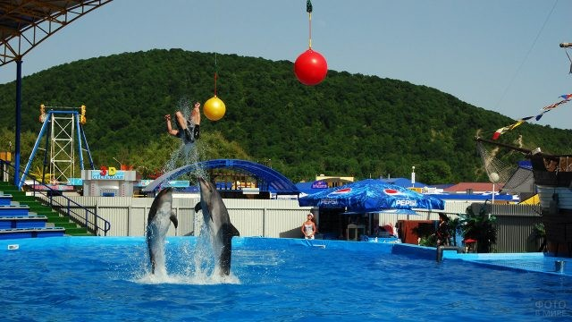Шоу в дельфинарии Архипо-Осиповки