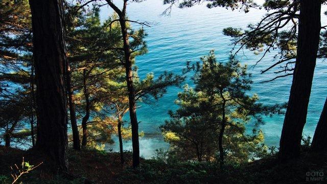 Сосны на берегу моря под Архипо-Осиповкой