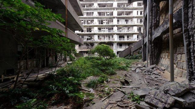 Зелёные кустарники на фоне заброшенных домов