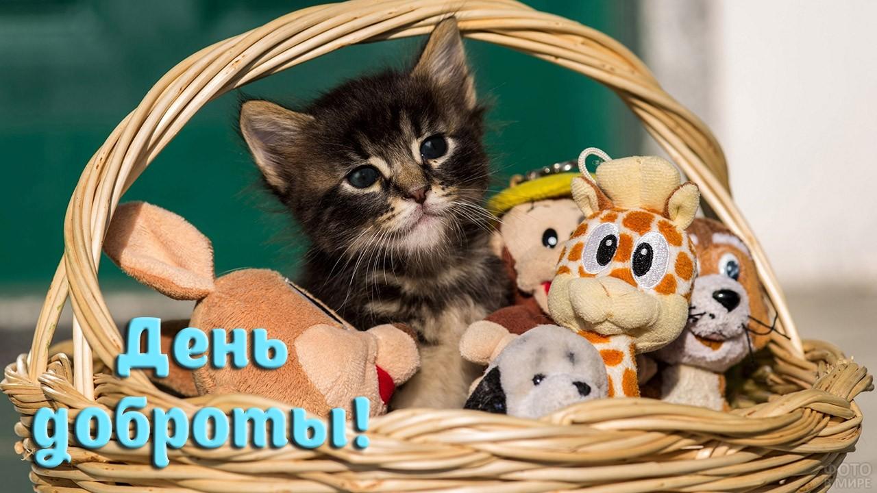 Котёнок в корзине с плюшевыми игрушками