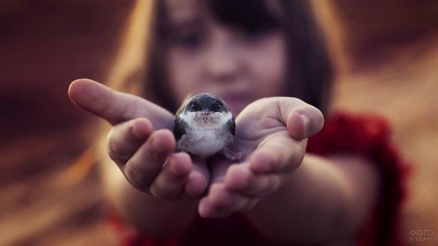 Птенец в руках у девушки