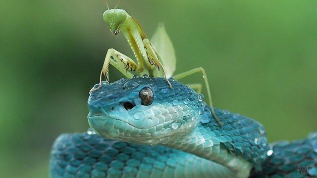 Богомол сидит на мокрой змее