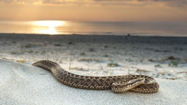 Длинная змея на фоне красивого неба