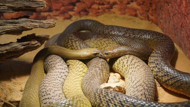 Две длинные змеи обвились друг с другом