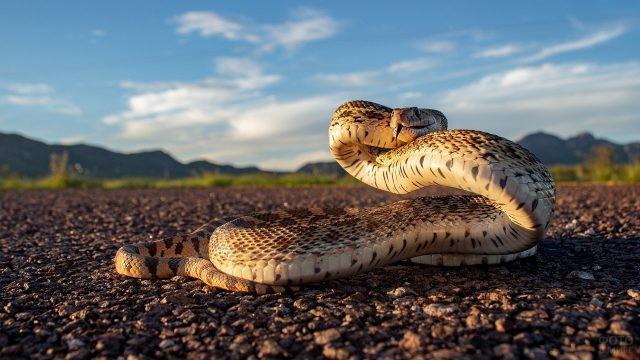 Извилистая змея приподнялась над землёй