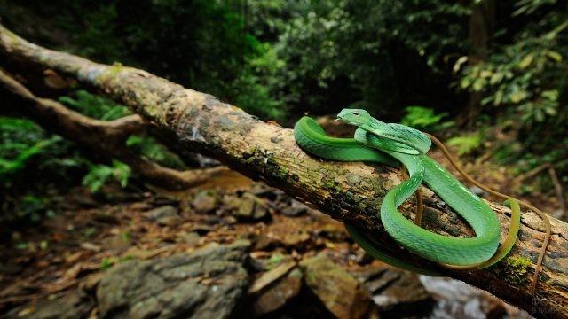 Красивая змея в джунглях