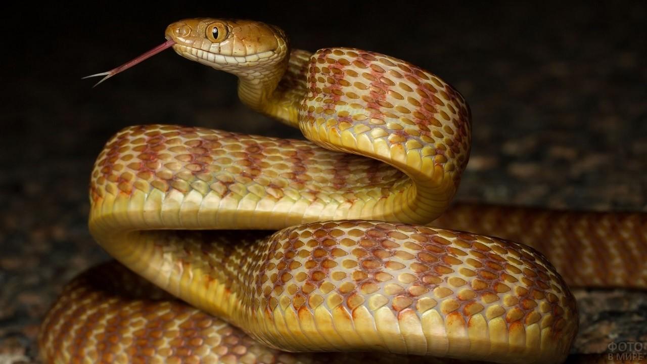 Красивые изгибы змеи
