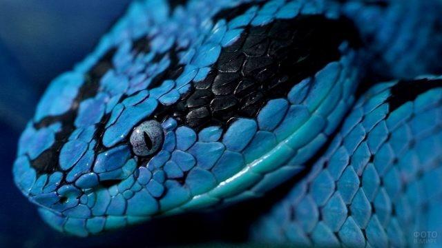 Морда голубой змеи крупным планом