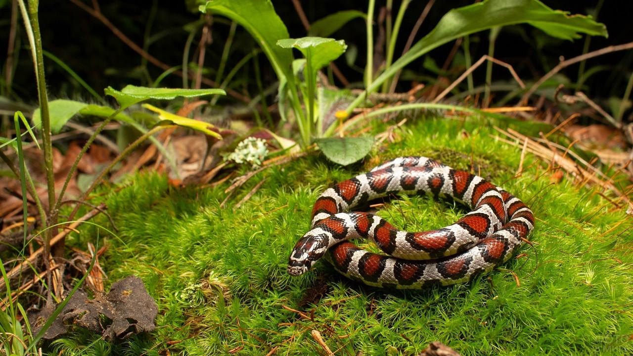 Пятнистая змея посреди зелёных растений