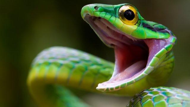 Зелёная змея с открытым ртом