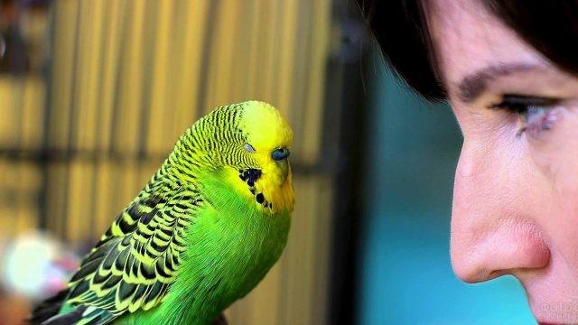 Женщина смотрит на попугая