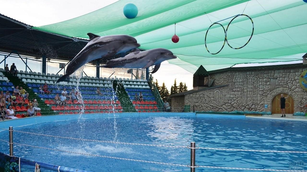 Выступление дельфинов в Адлерском дельфинарии