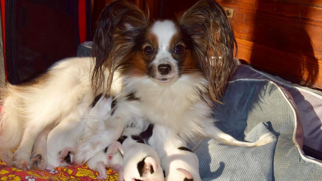 Мамочка с щенками на лежанке в комнате