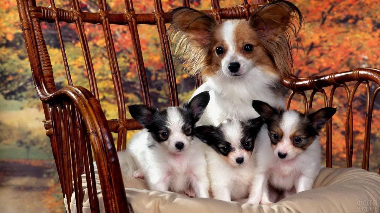 Мамочка с тремя щенками в кресле на природе