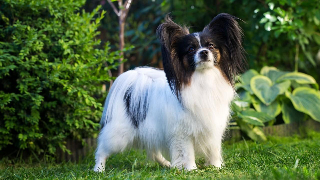 Милый пёс в саду