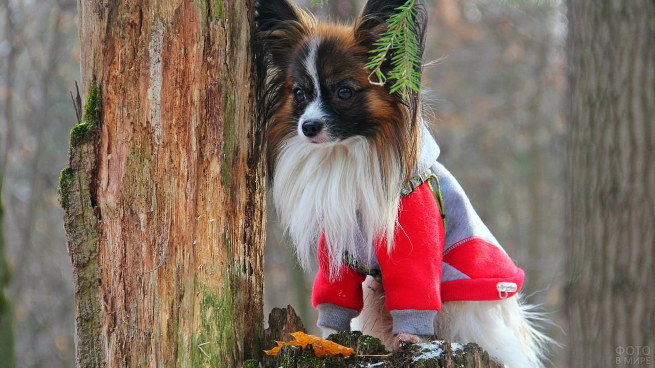 Одетая собака на пеньке у дерева