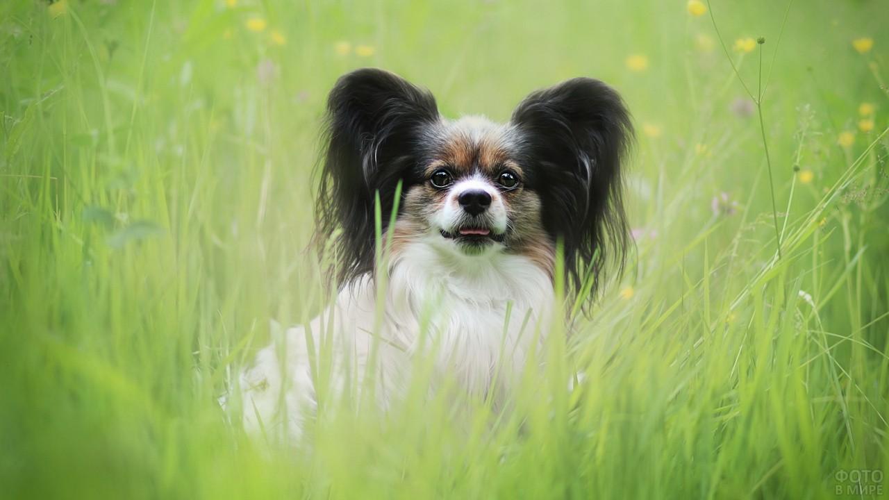 Породистая собака выглядывает из травы