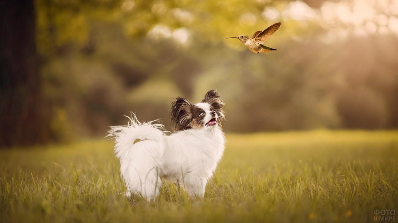 Забавный пёс наблюдает за летящей птицей