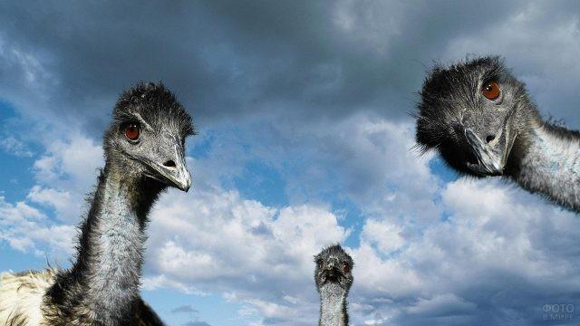 Голова птиц на фоне красивого неба