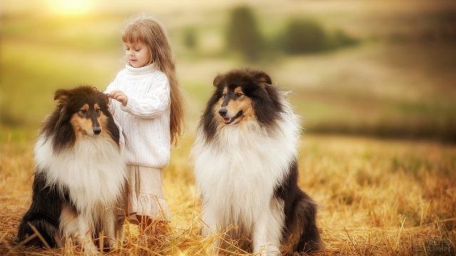 Девочка расчёсывает собак на природе