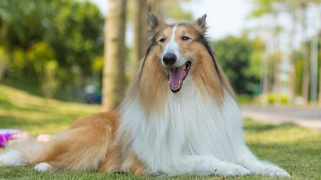 Довольная собака лежит на траве в лесу