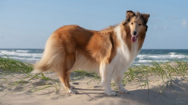Красивая стойка собаки на песке у моря