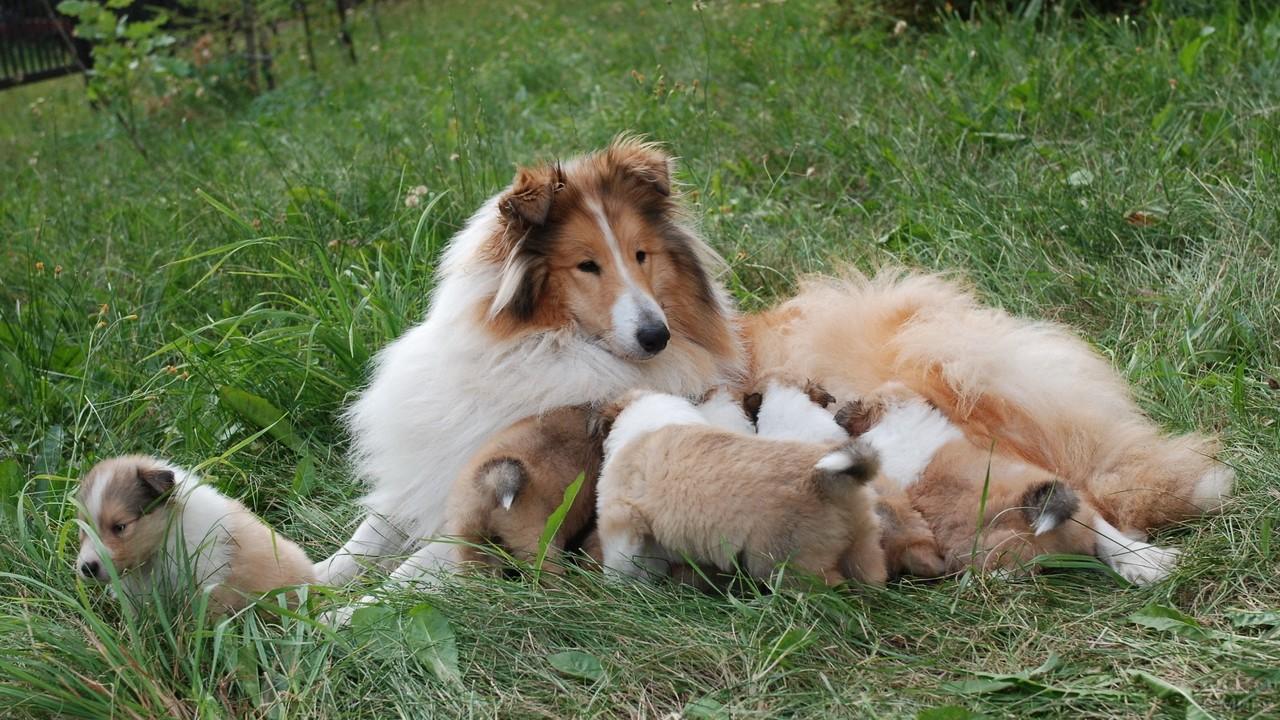 Мамочка с щенками в траве