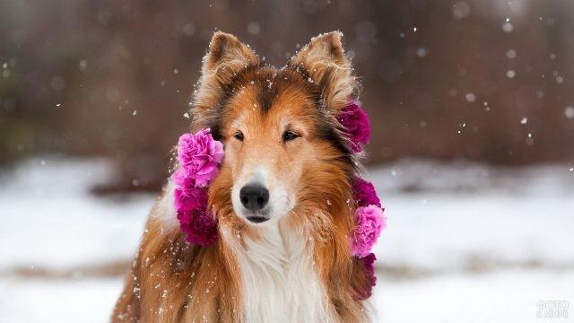 Милая собака в цветах на фоне снежной природы