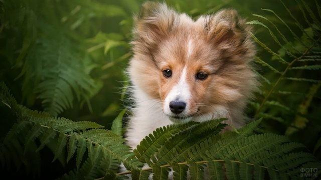 Милый щенок выглядывает из листьев папоротника