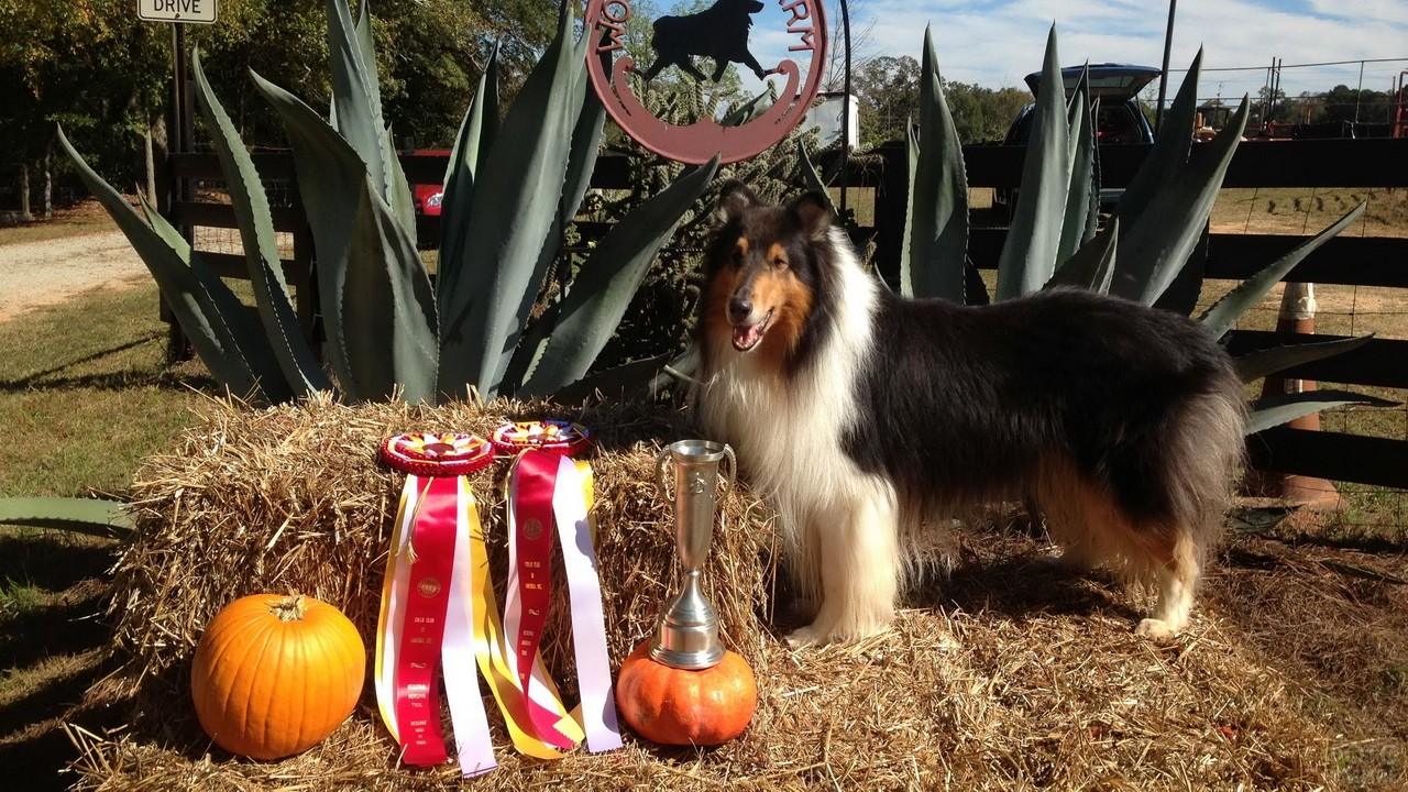 Победитель на выставке собак с медалями и кубком