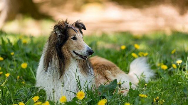 Улыбчивая собака в траве с одуванчиками