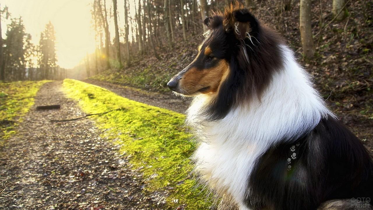 Задумчивая собака в профиль на лесной дороге
