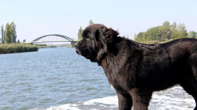 Чёрная собака на фоне моста