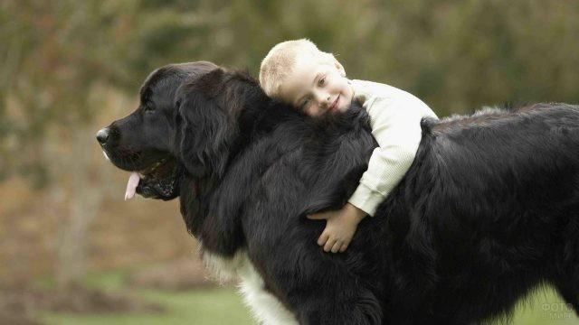 Мальчик верхом на собаке