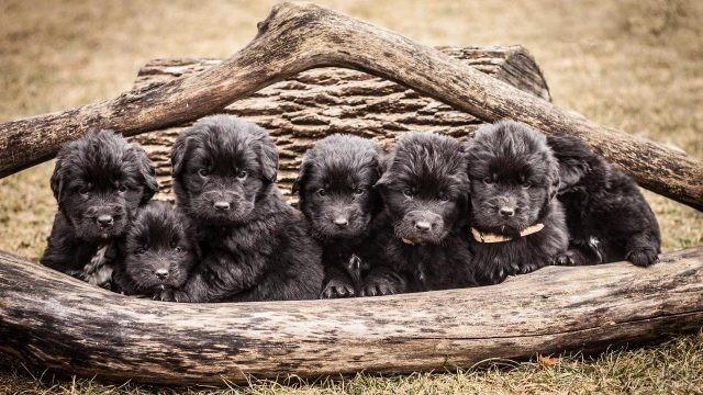 Милые щенки водолаза под корягой
