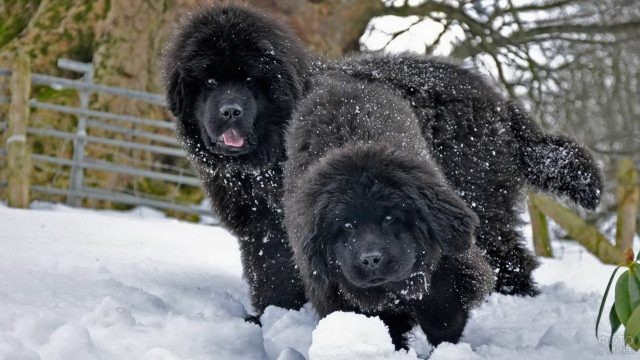 Молодые собаки бегают по снегу