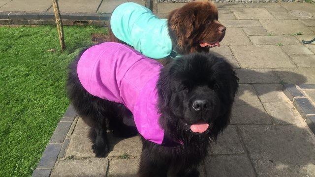 Одетые собаки на тротуаре