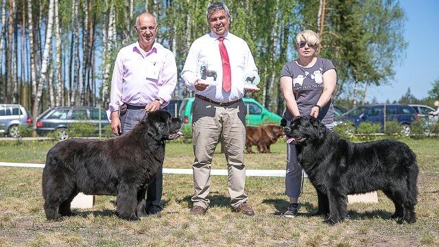Породистые собаки получили награды на выставке
