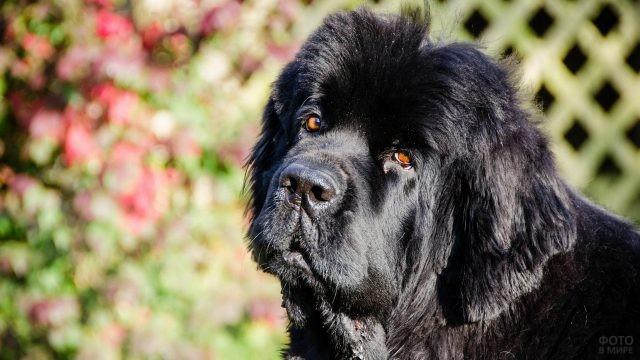 Равнодушный пёс на фоне цветов